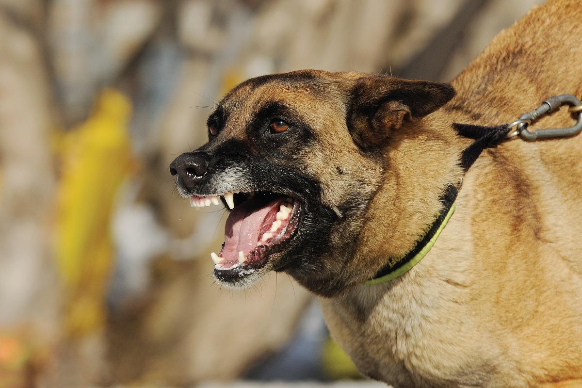 Dog Bite Attorney in Greenville, SC